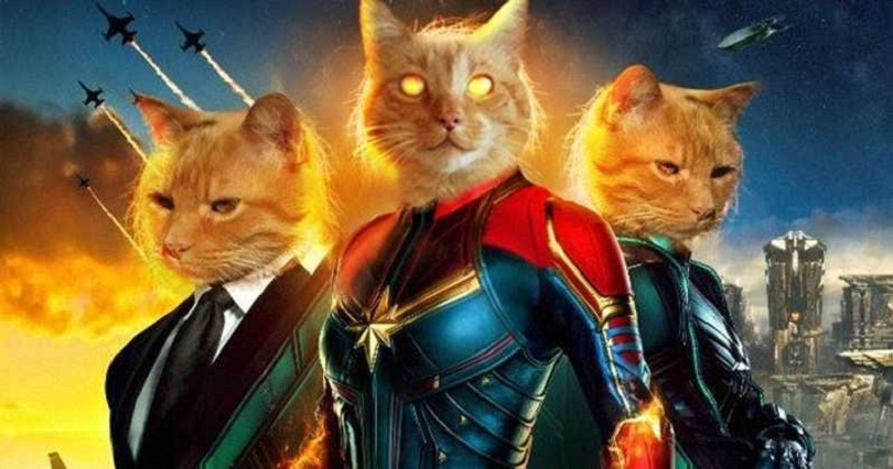 captain-marvel-goose-the-cat-live-stream.jpg (115.84 Kb)